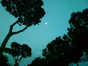 I pini di Villa Borghese