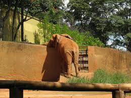 Allo zoo di Sao Paulo: tentativo di evasione?