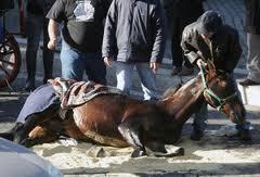 Cavallo di una botticella a terra a seguito di incidente