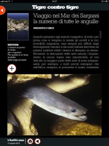 Tigre contro tigre - Viaggio nel Mar dei Sargassi la nurserie di tutte le anguille - di Margherita d'Amico - Repubblica sera