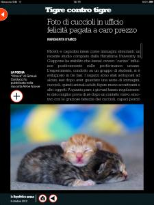 Tigre contro tigre - Foto di cuccioli in ufficio, felicità pagata a caro prezzo - di Margherita d'Amico - Repubblica sera