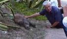 Il cucciolo di cinghiale con il signor Demartis